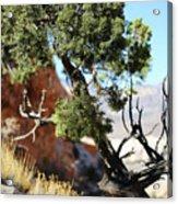 Red Rock Canyon Nv 5 Acrylic Print