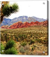 Red Rock Canyon Acrylic Print