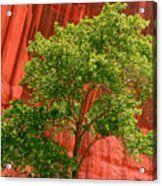 Red Rock Green Tree Acrylic Print