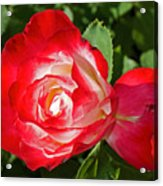Red Rose And A Sidecar At Pilgrim Place In Claremont-california Acrylic Print