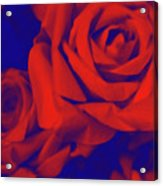 Red, Rose And Blue Acrylic Print