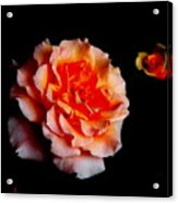 Red Rose And Bud Acrylic Print by Gaynor Perkins