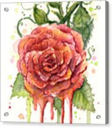 Red Rose Dripping Watercolor  Acrylic Print