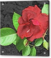 Red Rose For My Lady Acrylic Print
