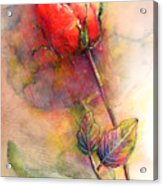 Red Rose From The Past Acrylic Print