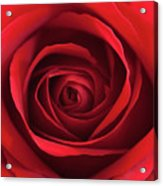 Red Rose Acrylic Print by George Lovelace