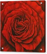 Red Rose II Acrylic Print