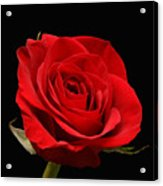 Red Rose On Black 1 Acrylic Print