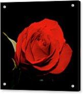 Red Rose On Black 2 Acrylic Print