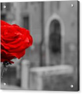 Red Rose With Black And White Background Acrylic Print