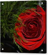 Red Rose With Garnish And Black Velvet Acrylic Print