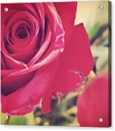 Red Roses Acrylic Print