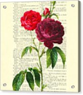 Red Roses For Valentine Acrylic Print
