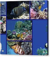Red Sea Collage Acrylic Print