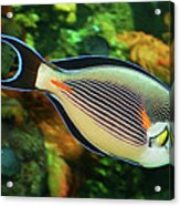Red Sea Fish Acrylic Print
