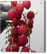 Red Seedless Grape Cluster Acrylic Print