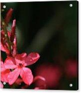 Red Star Acrylic Print