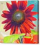 Red Sunflowers At Sundown Acrylic Print