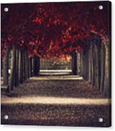 Red Surreal Path  Acrylic Print
