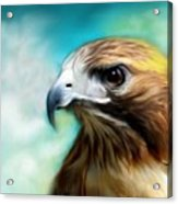 Red Tail Hawk  Acrylic Print by Crispin  Delgado