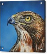 Red-tailed Hawk......honor Acrylic Print