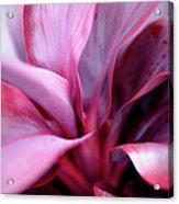 Red Ti-leaf Macro Acrylic Print
