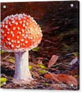 Red Toadstool Acrylic Print