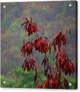 Red Tree In The Rain Acrylic Print