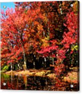Red Trees By Lake Acrylic Print