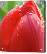 Red Tulip Flower Macro Artwork 16 Floral Flowers Art Prints Spring Dew Drops Nature Art Acrylic Print