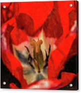 Red Tulip Texture Acrylic Print