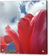 Red Tulips Flowers Art Prints Spring Tulip Garden White Clouds Baslee Troutman Acrylic Print