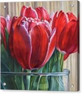Red Tulips, Glass Rim Acrylic Print