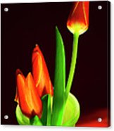 Red Tulips In Vase # 4. Acrylic Print