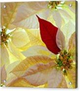 Red Velvet Acrylic Print