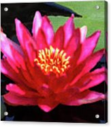 Red Water Lily - Palette Knife Acrylic Print