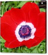 Red White N Blue Acrylic Print