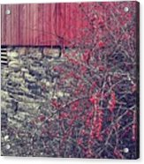 Red Winter Acrylic Print