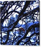 Red Woodshed Acrylic Print