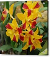 Red Yellow Orchids Acrylic Print