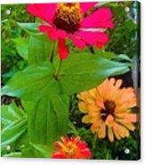 Red Yellow Zinnia Flowers Acrylic Print