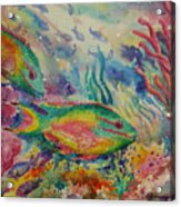 Redband Parrotfish Acrylic Print