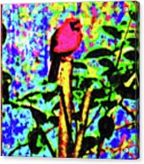 Redbird Dreaming About Why Love Is Always Important Acrylic Print