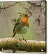 Redbreast Bird Acrylic Print