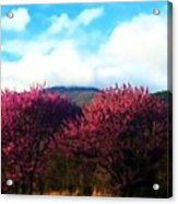 Redbud In The Blue Ridge Acrylic Print