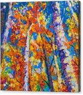 Redemption - Fall Birch And Aspen Acrylic Print by Talya Johnson