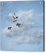 Redheaded Ducks Riding The Storm Acrylic Print