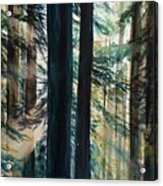 Redwood Light Acrylic Print