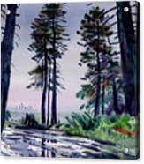 Redwood Reflections   Acrylic Print