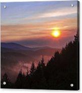 Redwood Sun Acrylic Print